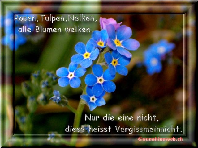 Spruch Frhling Gnseblmchen Mit Grnem Hintergrund Margerite